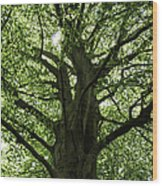 Witness Tree Wood Print