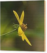 Wodland Flower With Curlicue On Top Wood Print