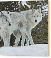 Wolf - Friend Wood Print