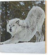 Wolf - Yoga Wood Print