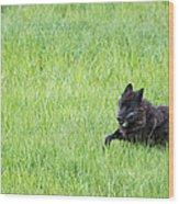 Wolf 889f Wood Print