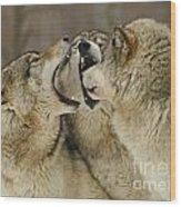 Wolf Display Wood Print