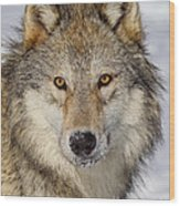 Wolf Face To Face Wood Print