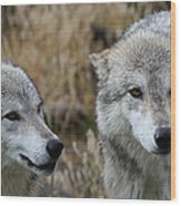 Wolf Glare II Wood Print