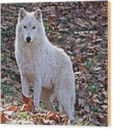 Wolf In Autumn Wood Print