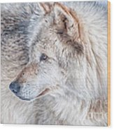 Wolf In Disguise Wood Print