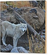 Wolf In The Wild Wood Print