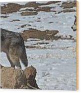 Wolf Pair Wood Print