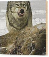 Wolf Protecting Kill Wood Print