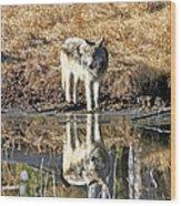 Wolf Pup Reflection Wood Print