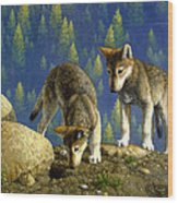 Wolf Pups - Anybody Home Wood Print by Crista Forest