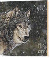 Wolf - Snow Storm Wood Print