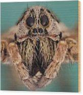 Wolf Spider 5x Wood Print