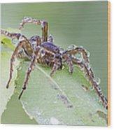Wolf Spider In Dew  Wood Print