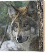 Wolf Upclose Wood Print