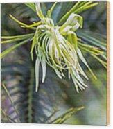 Wollemi Pine Wood Print