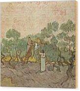 Women Picking Olives Wood Print