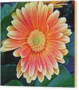 Wonderful Daisy Wood Print
