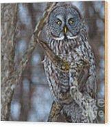 Wonderful Great Gray Wood Print