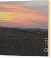 Wonderful Poppy Fields Galicia. Wood Print