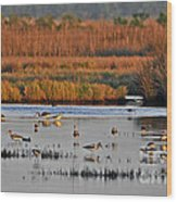 Wonderful Wetlands Wood Print by Al Powell Photography USA
