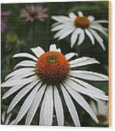 Wonderful White Cone Flower Wood Print