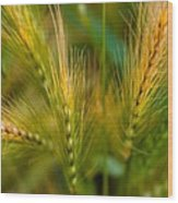 Wonderous Wild Wheat Wood Print