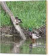 Wood Duck And Mallard Wood Print