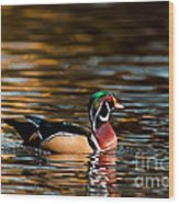 Wood Duck At Morning Wood Print