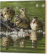 Wood Duck Babies Wood Print