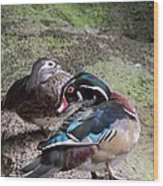 Wood Duck Couples Wood Print