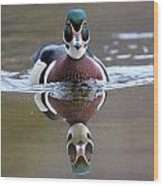 Wood Duck Drake Frontal Wood Print