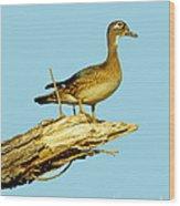 Wood Duck Hen In Tree Wood Print