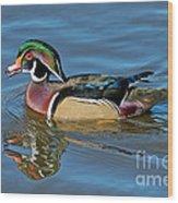 Wood Duck Male Calling Wood Print