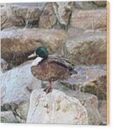 Wood Duck On Fountain Wood Print