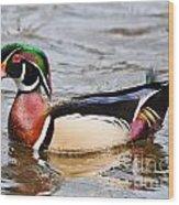 Wood Duck Profile Wood Print
