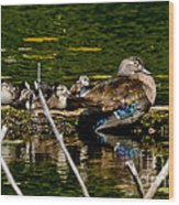 Wood Duck Rest Time Wood Print