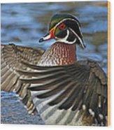 Wood Duck Standing Ovation Wood Print