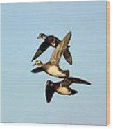 Wood Duck Trio Flight Wood Print