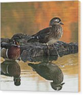 Wood Ducks Wood Print