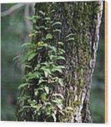 Wood Flora 2013 Wood Print