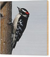 Wood Pecker Wood Print