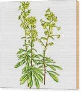 Wood Spurge (euphorbia Amygdaloides) Wood Print