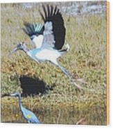 Wood Stork And Blue Heron Wood Print