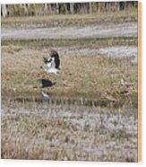 Wood Stork And Herons Wood Print