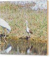 Wood Stork And Ibis And Heron Wood Print