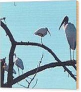 Wood Stork And Ibis Wood Print