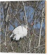 Wood Stork In A Tree Wood Print