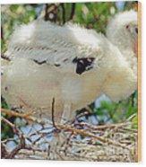 Wood Stork Mycteria Americana Wood Print