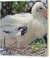 Wood Stork Nestling Wood Print